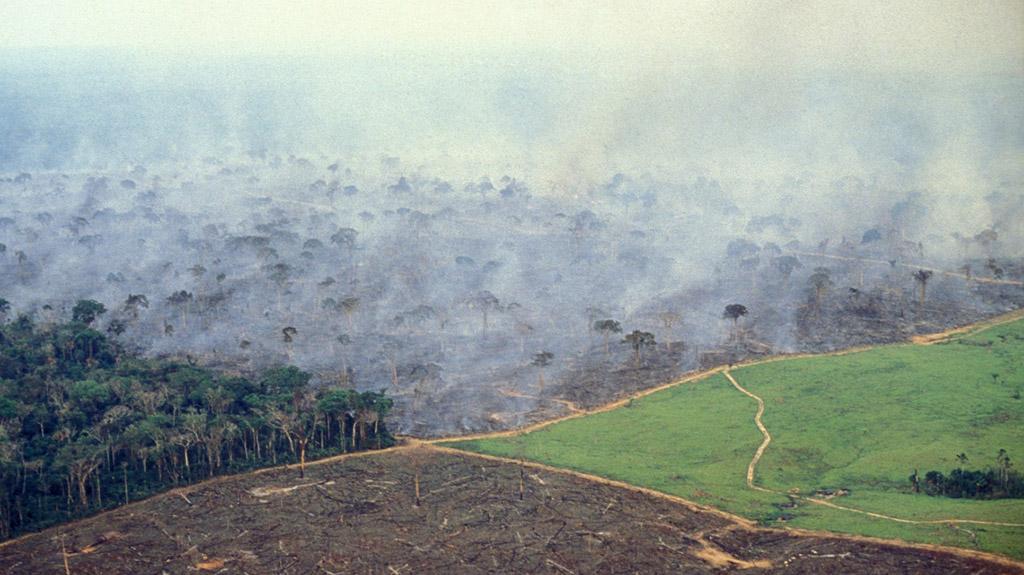 18 INMD deforestazione amazzonia2 lifegate it