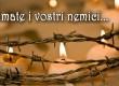 VII Domenica T. O. - Anno C